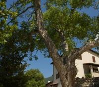 il-grande-albero