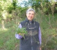 raccolta-erbe